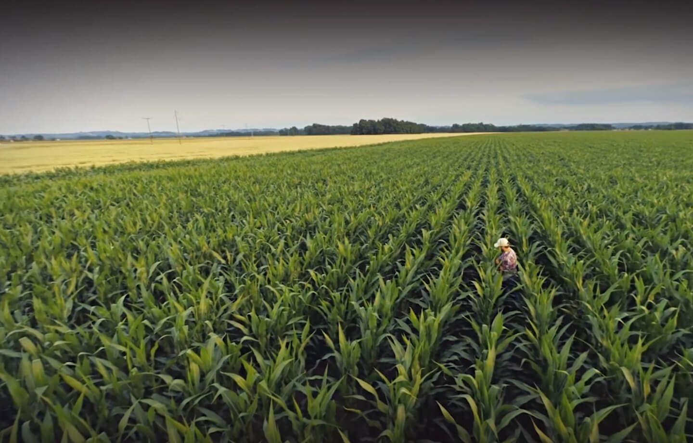 Resultado de imagem para irrigação